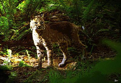 Lynx Rufus Print by David Lee Thompson
