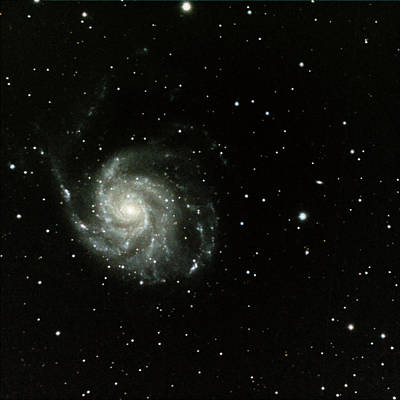 Astronomy Photograph - M-101, The Pinwheel Galaxy by A. V. Ley
