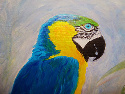 Blue And Gold Macaw Painting - Macaw Head by Anne Marie Brown