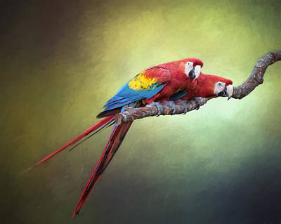 Macaw Parrots Out On A Limb Print by David and Carol Kelly