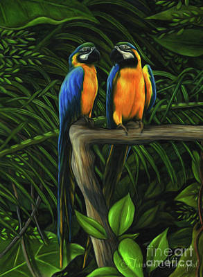 Rainforest Drawing - Macaws by Tammara Markegard