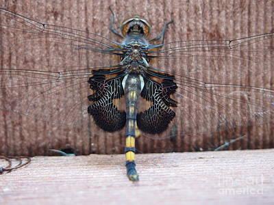 Indiana Photograph - Macro Dragonfly  by Sarah  Mitcheltree