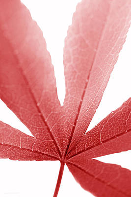 Macro Japanese Red Leaf Vertical Print by Jennie Marie Schell
