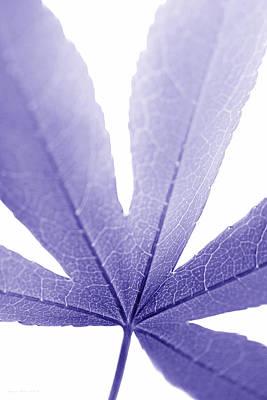Macro Leaf Purple Vertical Print by Jennie Marie Schell