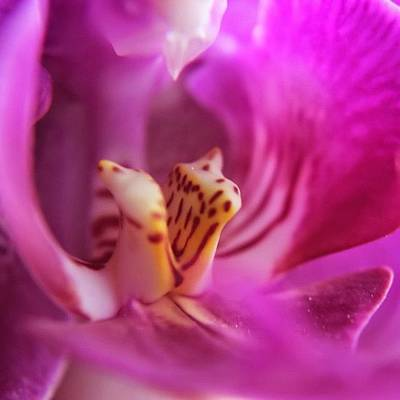 Orchids Photograph - Bliss by Jen McKnight