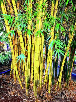 Cristiano Ronaldo Photograph - City Park Bamboo Grass by Wilf Doyle