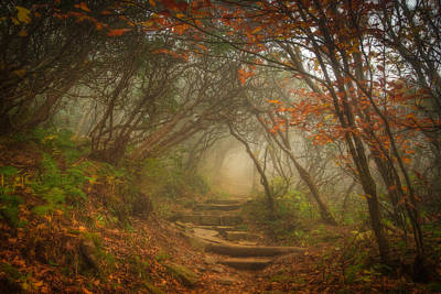 Asheville Artist Photograph - Magic Forest by Joye Ardyn Durham