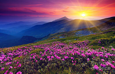 Idyllic Digital Art - Magic Pink Rhododendron Flowers On Summer Mountain by Unknow