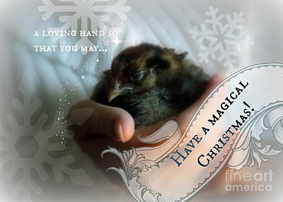 Magical Chickmas Print by Anita Faye