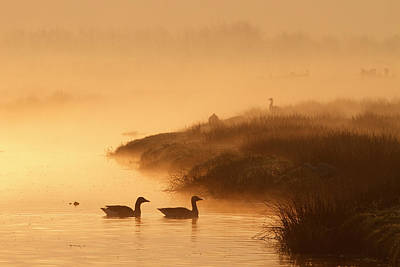 Magical Misty  Morning Print by Roeselien Raimond