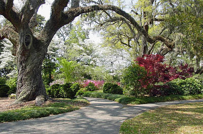 Live Oaks Photograph - Magical Wonderland by Suzanne Gaff