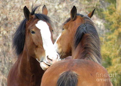 Fort Collins Photograph - Magnificant Horses -the Clydesdales-10 by Diane M Dittus