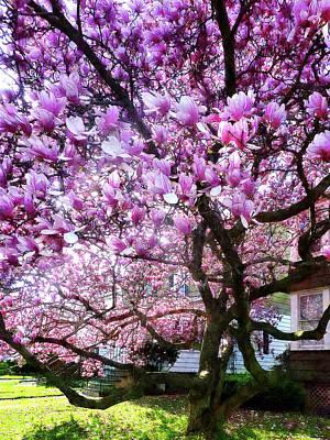 Floral Photograph - Magnificant Magnolias by Susan Savad
