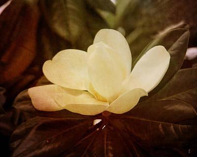 Antique Photograph - Magnolia IIi by Jai Johnson