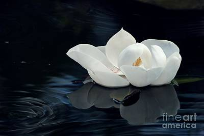 Florida Flowers Digital Art - Magnolia by Kendra Longfellow