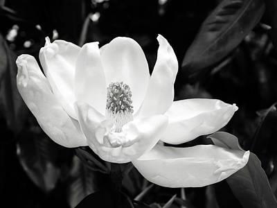 Magnolia Memories 3- By Linda Woods Print by Linda Woods