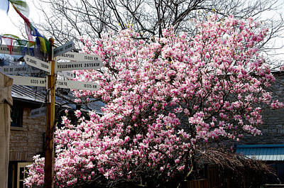 Magnolia Print by Paul Wash