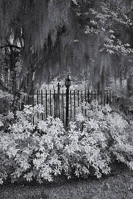 Magnolia Plantation Lightpost Print by Cindy Archbell