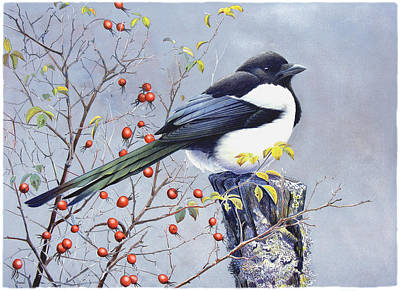 Magpies Painting - Magpie by Dag Peterson