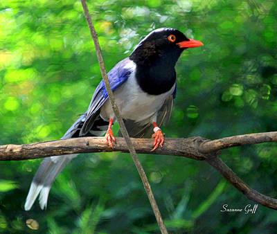 Bird Photograph - Magpie II Enhanced by Suzanne Gaff