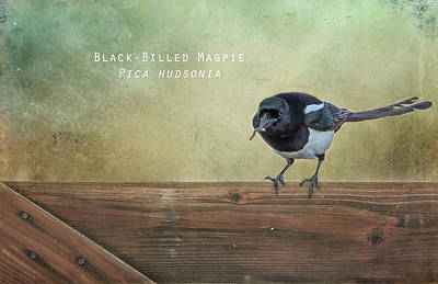 Magpies Digital Art - Magpie With A Worm by Belinda Greb