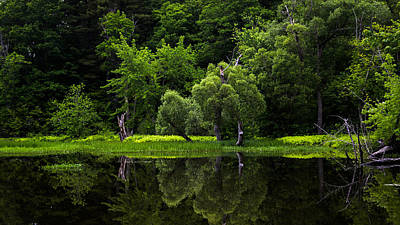 Nature Photograph - Maine Reflections by Donna Lee