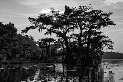 B Photograph - Majestic Cypress by Stefan Mazzola