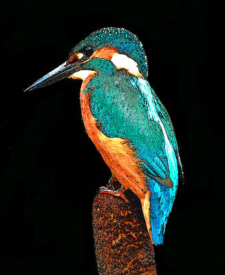 Kingfisher Digital Art - Majestic Kingfisher by Laura Western
