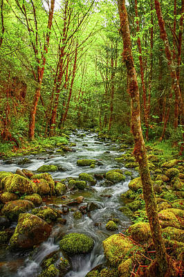 Obryant Photograph - Majestic Stream by Tyra  OBryant