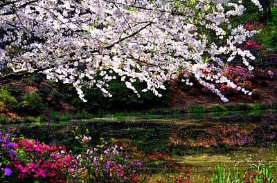 Photograph - Majesty Garden.... by Tanya Tanski