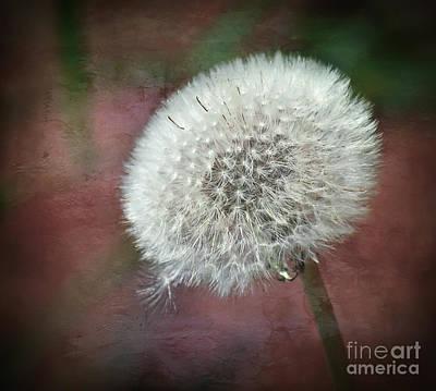 Wildflower Photograph - Make A Wish by Kerri Farley