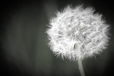 Wishes Photograph - Make A Wish by The Art Of Marilyn Ridoutt-Greene