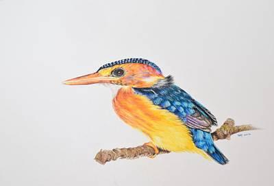 Kingfisher Drawing - Malachite Kingfisher by Biophilic Art