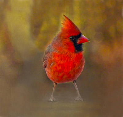 Male Cardinal In Fall Print by Sandi OReilly