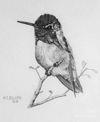 Wildlife Drawing - Male Costa's Hummingbird by Kevin Ballew