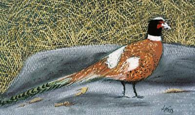 Male Pheasant Print by Jan Amiss