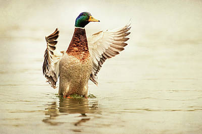 Mallards Photograph - Mallard by Everet Regal