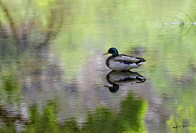 Mallard In Mountain Water Original by Mark Myhaver