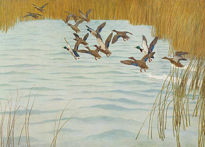 Rivers In The Fall Painting - Mallards In Autumn by Newell Convers Wyeth