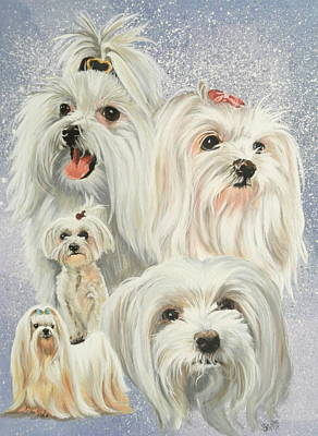 Maltese Collage Print by Barbara Keith