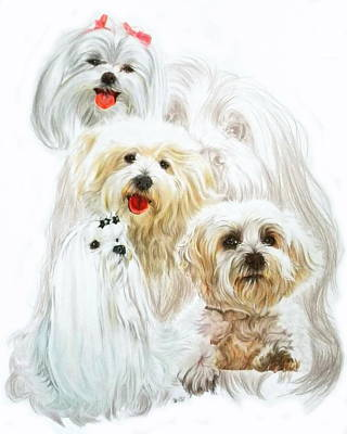 Maltese W/ghost Original by Barbara Keith
