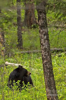 Bear Photograph - Mama Bear by Natural Focal Point Photography