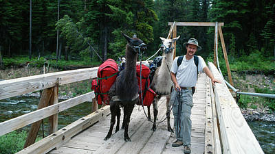 Llama Photograph - Man Posing With Two Llamas On Wilderness Drawbridge by Jerry Voss