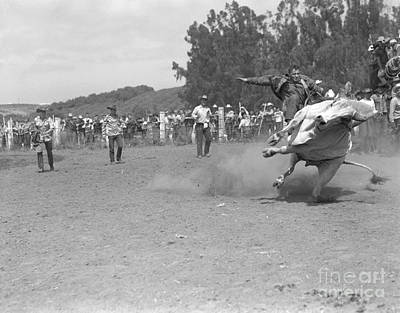 Bull Riders Photograph - Man Riding A Bull At Rodeo, C.1950s by Pound/ClassicStock