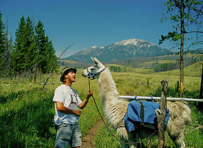 Llama Photograph - Man Teasing A Llama by Jerry Voss