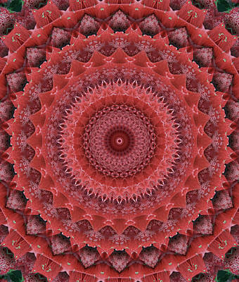 Adorable Digital Art - Mandala In Reds by Jaroslaw Blaminsky