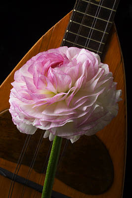 Concert Photograph - Mandolin And Ranunculus by Garry Gay
