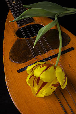 Hand Made Photograph - Mandolin With Red And Yellow Tulip by Garry Gay