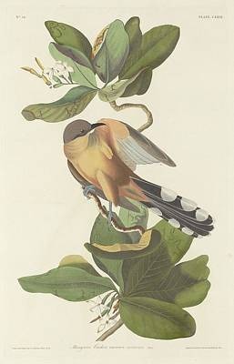 Cuckoo Drawing - Mangrove Cuckoo by John James Audubon