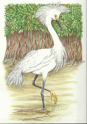 Egret Drawing - Mangrove Fishin' by Sue Bonnar